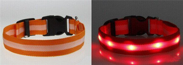 orange lysande led hund halsband