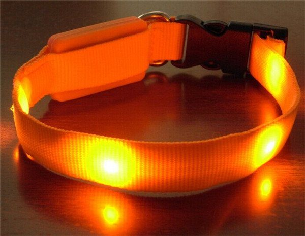 orange led halsband till valpar
