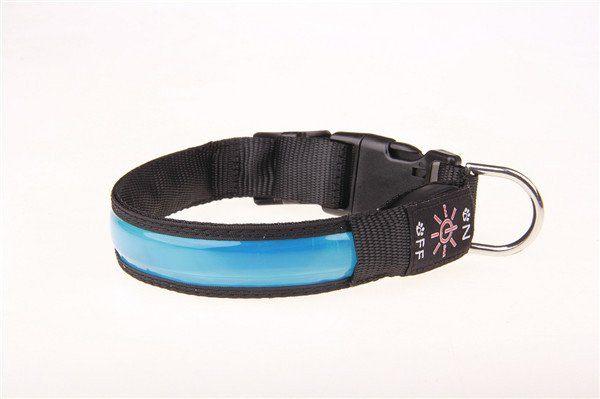 blått lysande hundhalsband